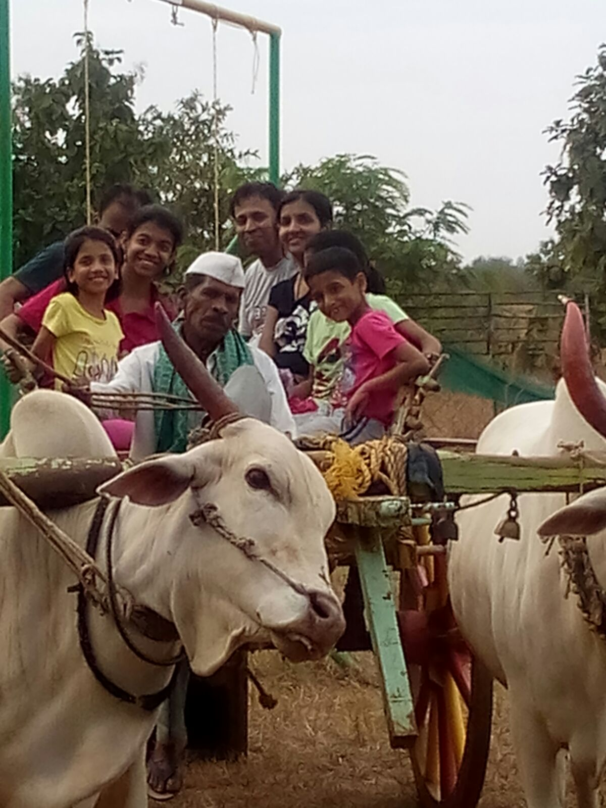 Bullock- Cart Ride in Dirghayu Farms
